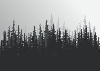 coniferous forest in black and white