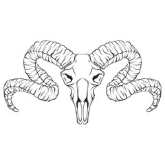 Vector hand drawn illustration of ram skull isolated. Tattoo artwork. Template for card, poster, banner, print for t-shirt, pin and badge