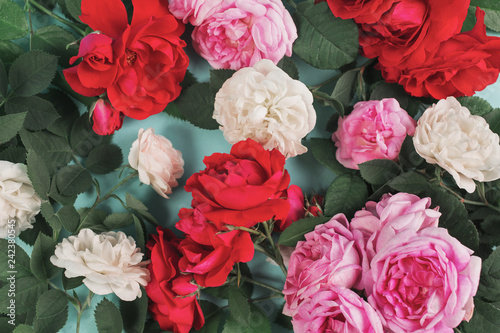 Rose Flowers Card On Blue Background Summer Wallpaper From Red