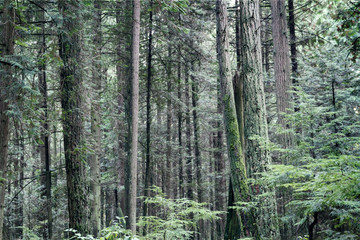 Pacific Spirit Park in the morning; Calm and stillness in the beautiful green forest