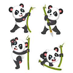 the cute collection of panda palying with the green bamboo