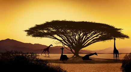 Silhouettes of african with giraffe animals