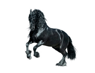 friesian horse woth long mane isolated on white background
