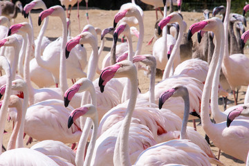 flock of pink flamingo birds