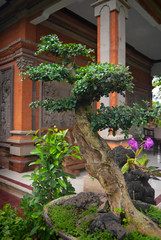 Canvas Prints Narrow alley Bonsai Tree in a Garden in Bali Indonesia. Bonsai is an Asian art form using cultivation techniques to produce small trees in containers/bonsai pots, that mimic the shape and scale of full size trees.