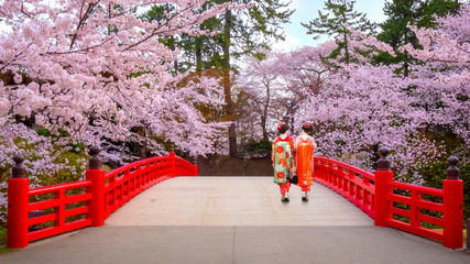 Foto op Plexiglas Asia land Japanese Geisga with Full bloom Sakura - Cherry Blossom at Hirosaki park, Japan