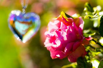 heart crystal glass  refract sunlight - rose garden background