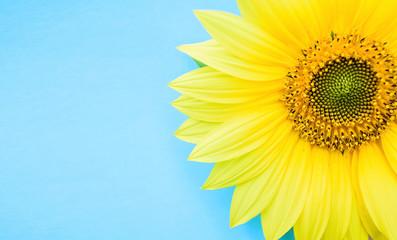Fotobehang Zonnebloem a beautiful sunflower on a blue background