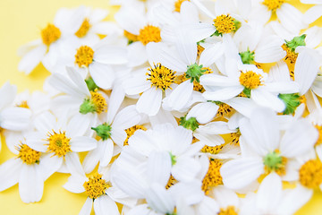 Beautiful white flowers / spring flower background material