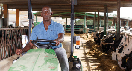 Man proffesional farmer  is sitting in the car near cows at the cow farm