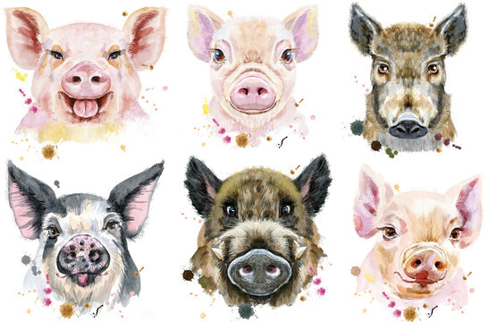 Set of watercolor portrait pigs and boar