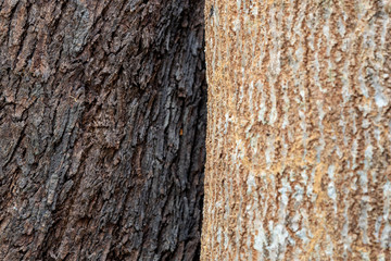 the bark of a tree two