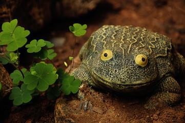 A frog statue next to a clover bush