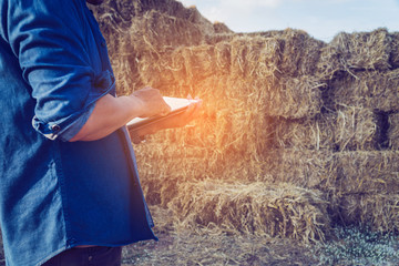 smart farmer checking stock of straw bales to animal feed at farmhouse in morning