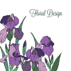 Template for greeting card with garden flowers iris on a white background, vector