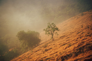 Hay in the mountains in the morning. Location: Pui Kho mountain in Northern Thailand