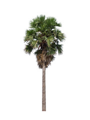 sugar palm on white background from Thailand
