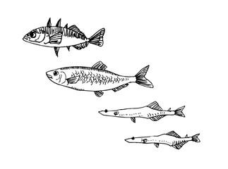 해산물 일러스트 / 손으로 그린 수산물 그림