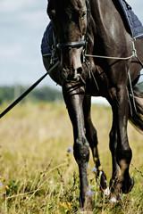 Foto op Plexiglas Training a horse on the lunge.