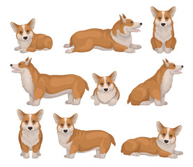 Set of Welsh corgi dog in different poses. Puppy with short legs and red coat. Cute home pet Detailed flat vector icons