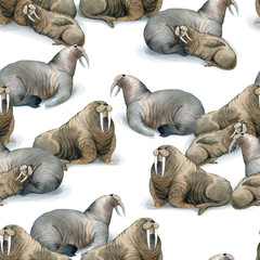Seamless watercolor pattern about north fauna. Ice and sea animal. Herd of brown warluses lies on snow