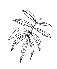 Hand-drawn sketch of a plant, isolated on white background. Abstract summer Vector illustration.