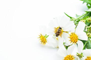 Spring beautiful white flowers / white flower