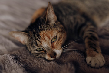 Cat lying on comfortable bed