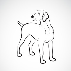 Vector of labrador dog on white background., Pet. Animals. Easy editable layered vector illustration.