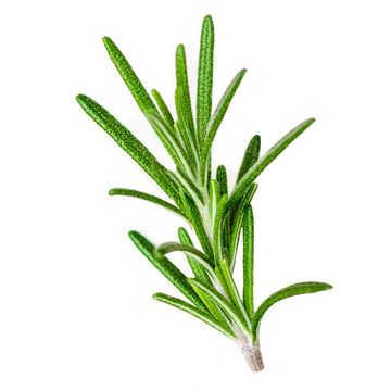Rosemary organic  herb isolated on the white background, macro. Flat lay