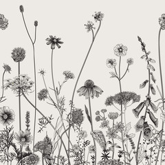 Obraz Floral border. Summer flowers. Vector illustration. Black and white - fototapety do salonu