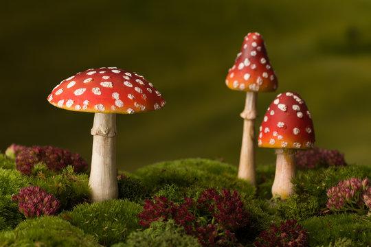 Three red toadstools