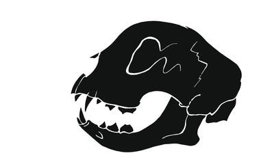 Katzenschädel   Cat Skull