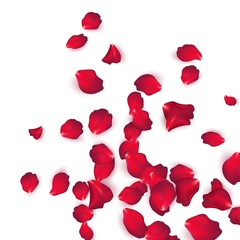 Falling red rose petals isolated on white background. Vector illustration