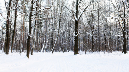 snow-covered footpath in urban park in winter