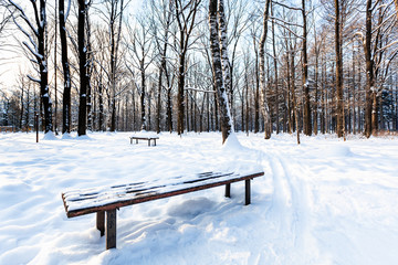 snow-covered bench in urban park in winter