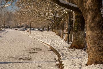 winter snow trees in Ioannina lake Greece
