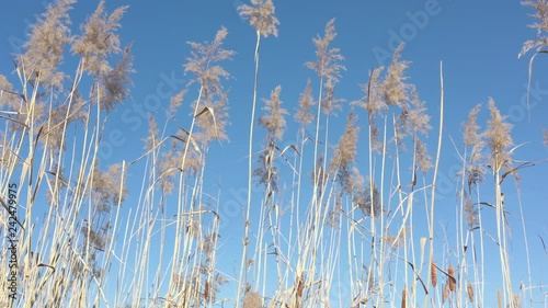 pampas grass and swinging