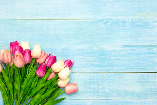 Beautiful pink tulip flowers on blue summer wooden background with copy space. Easter and spring greeting card. Minimal style.