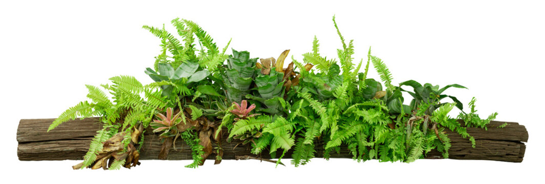 tropical jungle plants on timber tree isolated on white background with clipping path included.