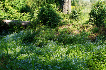 creek with forget-me-nots