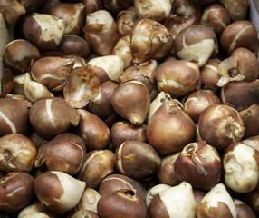 Bulbs in a market
