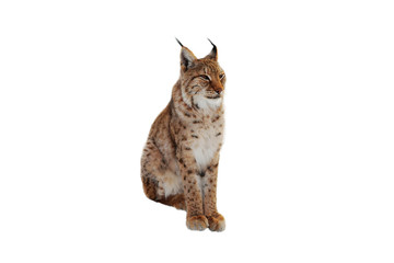Photo on textile frame Lynx lynx (lynx izabellinus) isolated