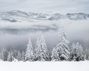 Winter forest on baclground of mountains