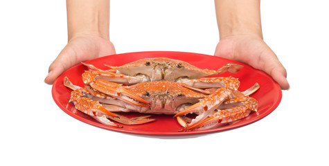 hand holding cooked crab prepared on red plate isolated on white background