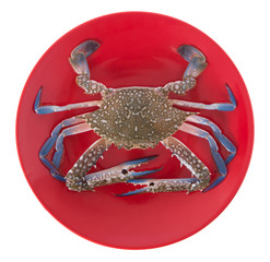 raw crab on a red plate isolated on white background.