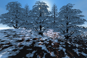 Snowy trees, a winter landscape, sun rays through the leaves and a blue sky.