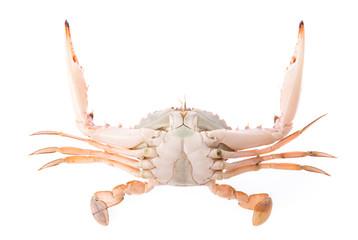 fresh crab isolated on white background