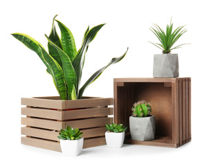Wall Mural - Different houseplants on white background
