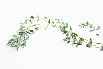 Branch of tropical plant on white background